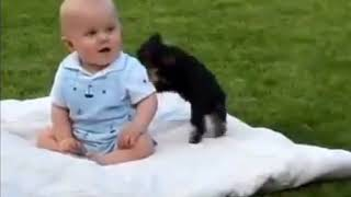 Funniest Virals - Cute Kids, Cats, Grandmas - America's Funniest Viral Videos