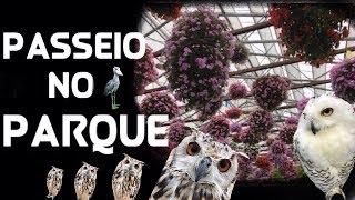 role no parque de aves e flores do Japão thumbnail