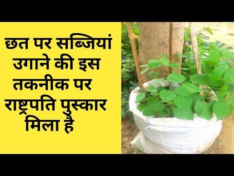 घर की छत पर सब्जियां उगाने की शुरूआत कैसे करें
