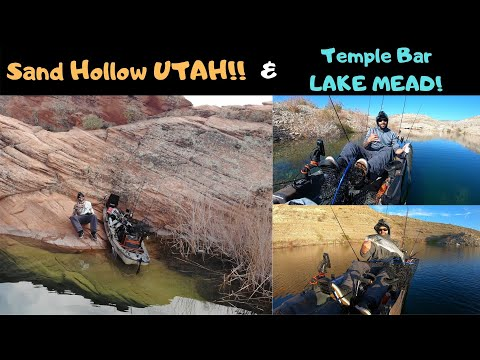 Sand Hollow Utah! And Temple Bar Lake Mead! Slow Winter Fishing......