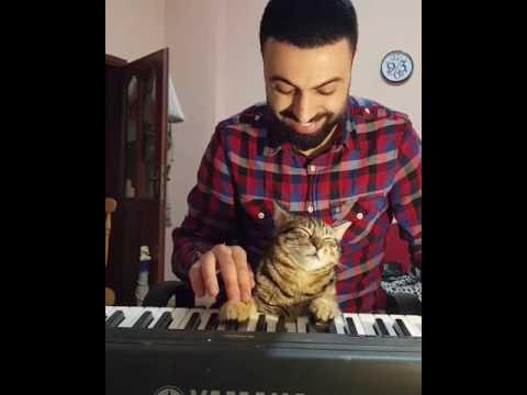 Pianist Cat ☺🎹