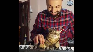 Download Pianist Cat ☺🎹 MP3 song and Music Video