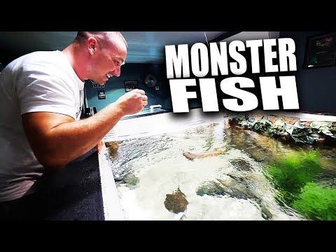 HAND FEEDING MY FISH AQUARIUMS!! | The King of DIY