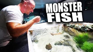 HAND FEEDING MY FISH AQUARIUMS!! | The King of DIY