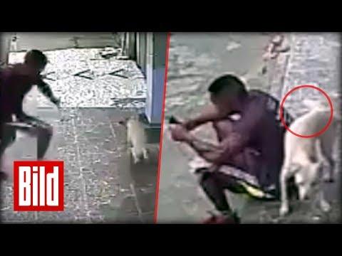 Hund pinkelt Mann an - Hydranten verfehlt