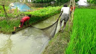 Net Fishing with beautiful nature | Real Village Fishing by Daily Village Life