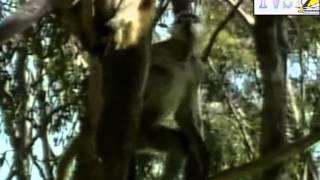ALLA RICERCA DELL'ANIMALE PIU' MISTERIOSO 1/2