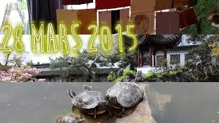 Jardin chinois Sun Yat-Sen ☼  | NOUVEAU DÉPART