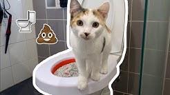 Opetan kissan VESSAPÖNTÖLLE????