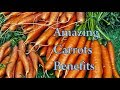 Undeniable Health Benefits of Carrots