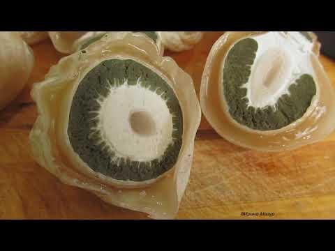 Как принимать гриб веселка