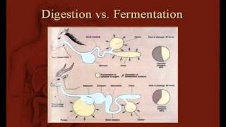 Video Are Humans Designed To Eat Meat? download MP3, 3GP, MP4, WEBM, AVI, FLV Mei 2018
