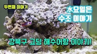 바다 물고기 키우는 강북구 고등학생의 35큐브 해수어 소개