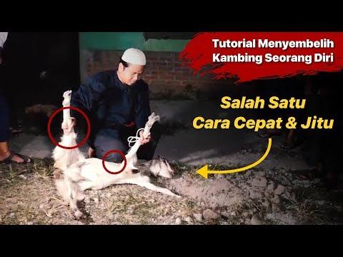 Tata cara penyembelihan hewan Kurban Teknik Penyembelihan hewan Qurban 1. Kepala Menghadap ke kiblat.