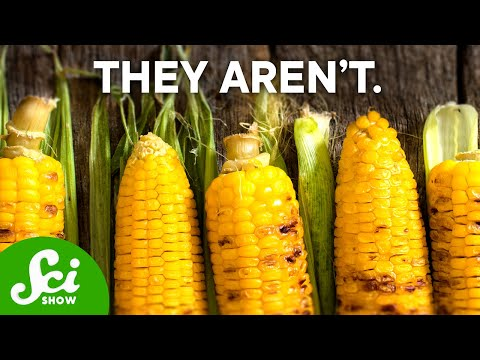 Why are GMOs Bad?