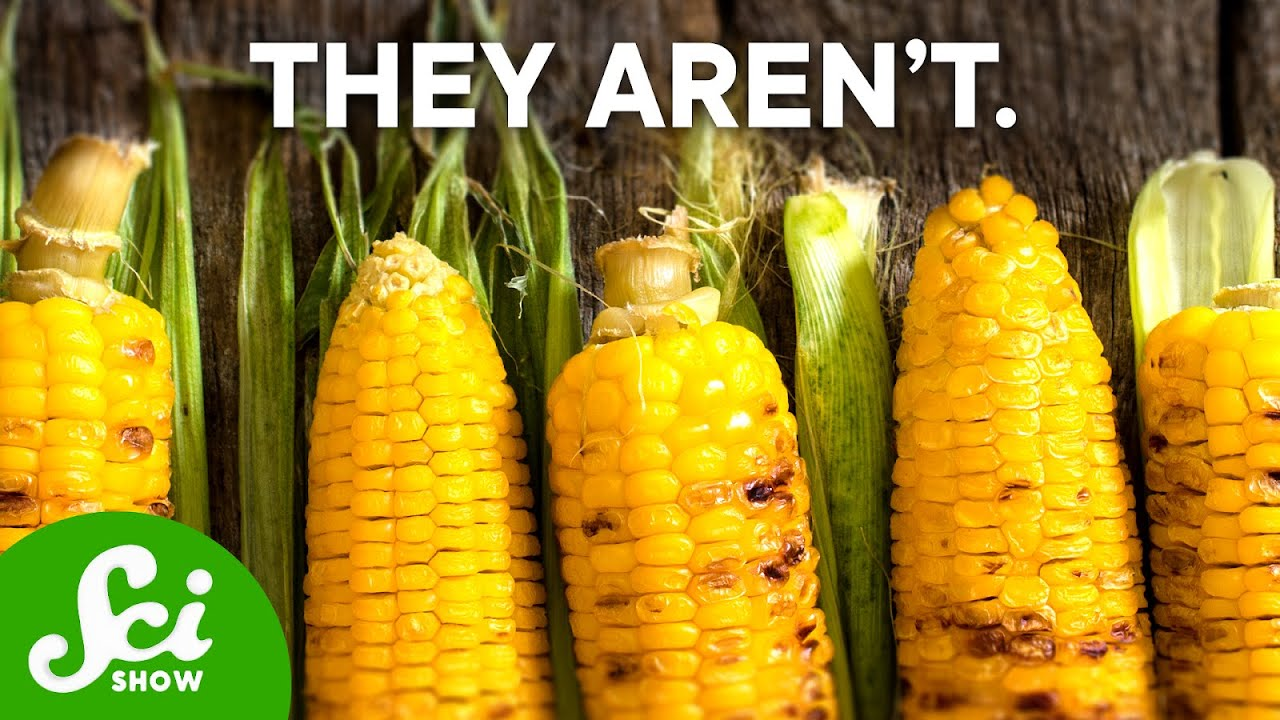 are gmos good for our health Watch the award-winning film on the health dangers of gmos protect your pets from gmos and pesticides is a program of the institute for responsible technology aimed at raising awareness of the health risks of gm foods join our grassroots effort to stop gmos in our food supply non-gmo.