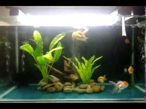 Simple decorations goldfish aquarium 40 gallons hd youtube for Easy aquarium fish