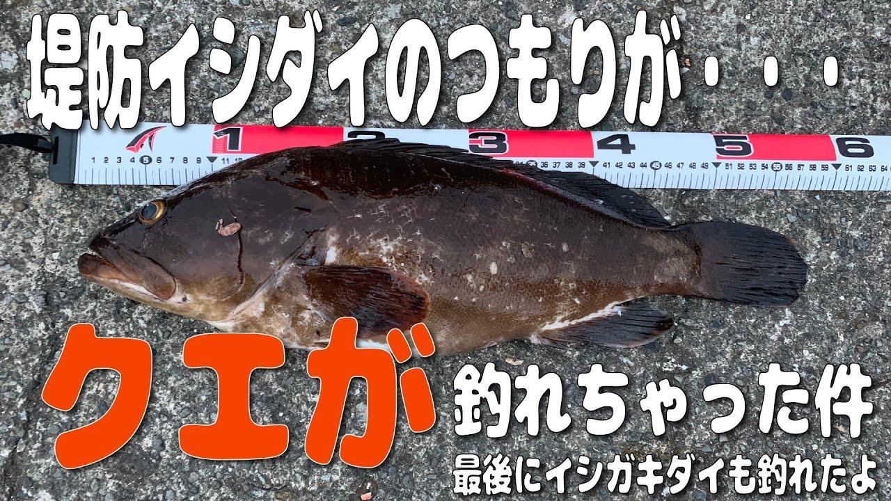 「初実釣動画」夕まづめの石鯛狙いの外道が超高級魚だった