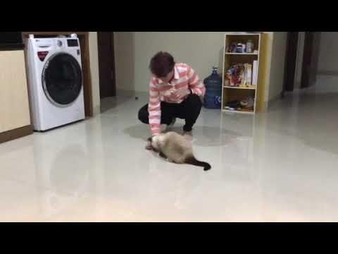 Amazing Cat Tricks in Indonesia!!