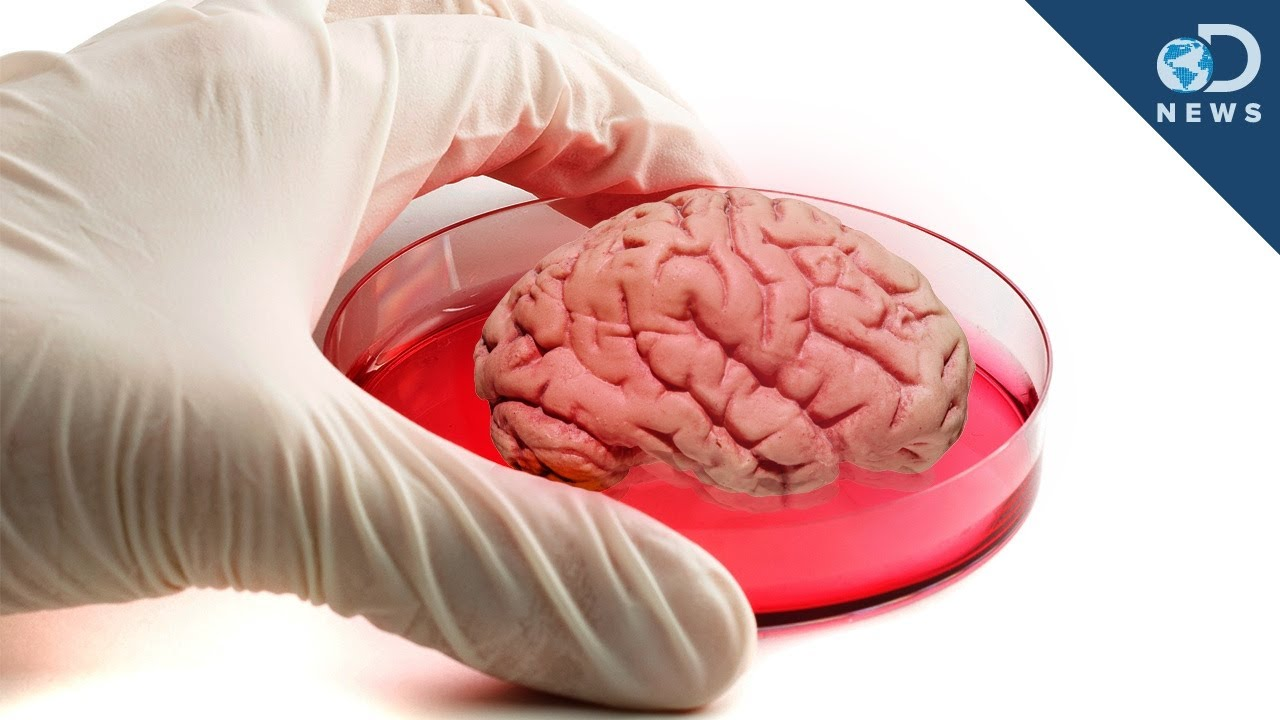 "mini human ""brain"" grown in lab - youtube, Muscles"