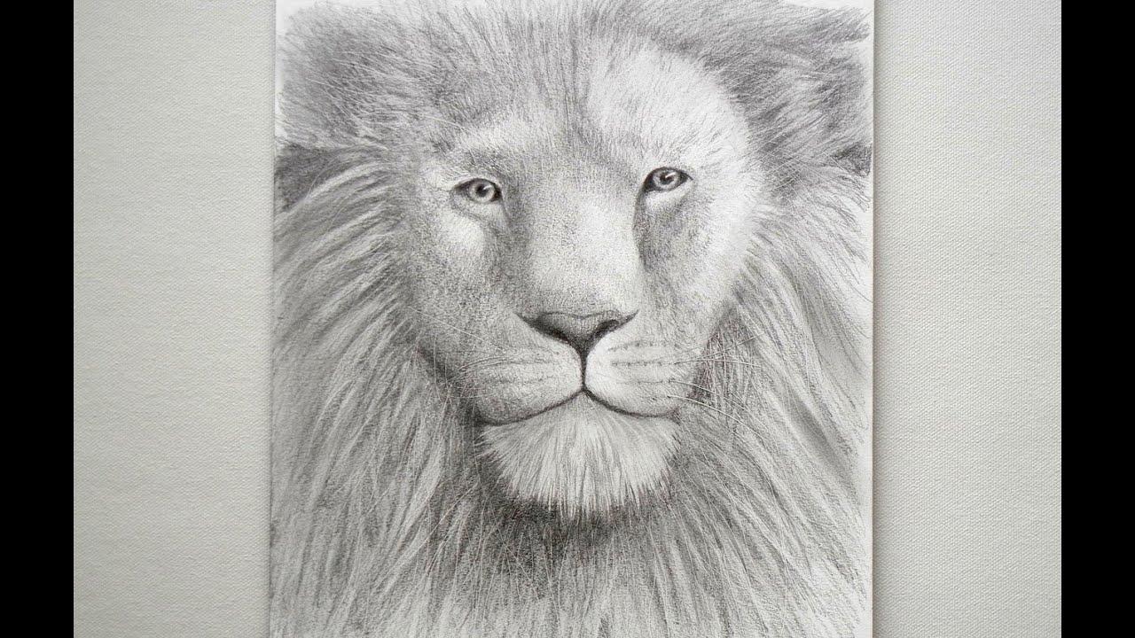 Cómo dibujar un León - Arte Divierte. - YouTube