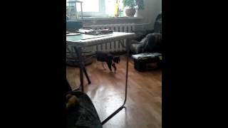 Умный котенок