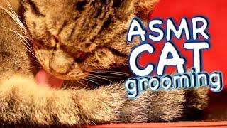 ASMR Cat - Grooming #17