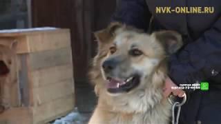 В Якутске волонтеры организации «Белый Бим» спасают брошенных кошек и собак