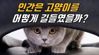 인간은 고양이를 어떻게 길들였을까?|고양이의 기원