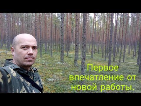 Великий Новгород - Боровичи - Хвойная.