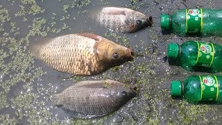 Traditional Catch Fish With Plastic Bottle Fish Trap | Fishing with grasshopper (part -3)