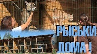 В гостях у Кати. Отмечаем переезд рысек с упоротыми зоологами. :)