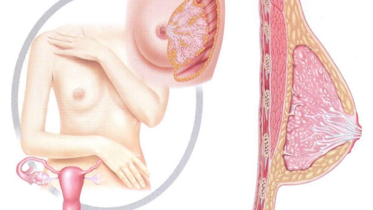 Симптомы фиброзной мастопатии - YouTube