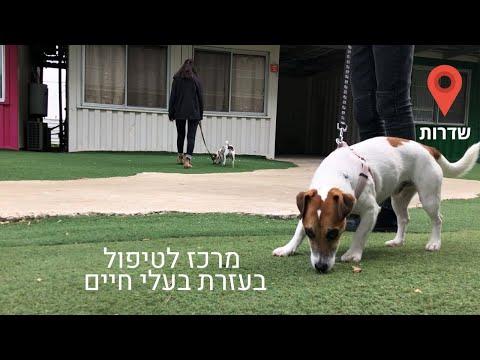 מרכז טיפול בעזרת בעלי חיים
