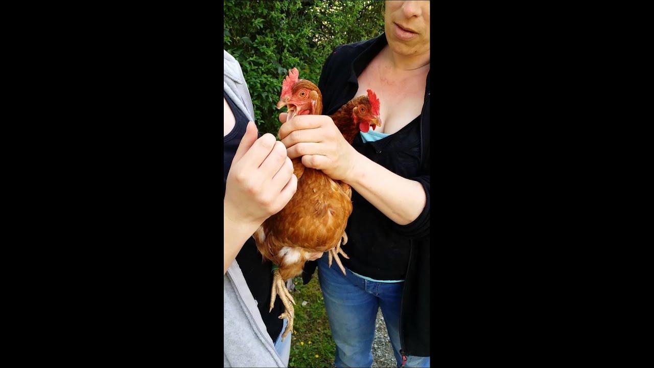 La langue d 39 une poule youtube - Image d une poule ...
