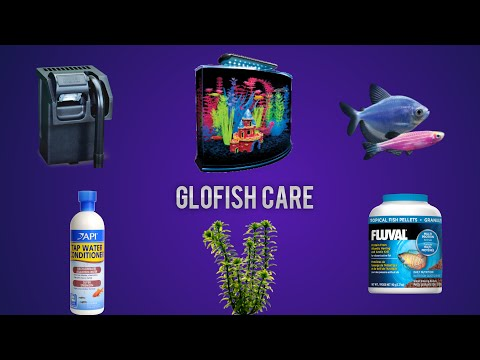 GloFish care