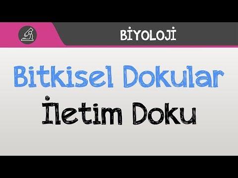 Youtube Doku