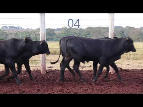 Leilão Machadinho Lote 04