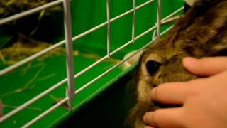 Как стричь когти кролику!(, 2016-11-14T16:59:02.000Z)