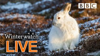 Cute wildlife cams UK 30 Jan 🦊❄️🐿 - BBC Winterwatch