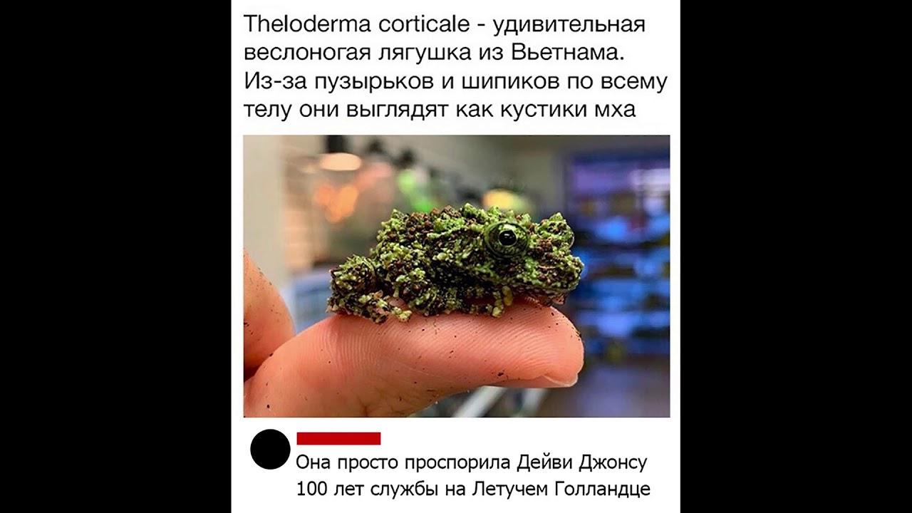 САМЫЙ СМЕШНОЙ МЕМ В МИРЕ №3 - YouTube