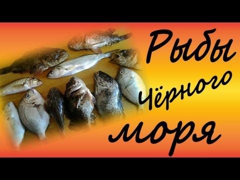 Рыбы чёрного моря