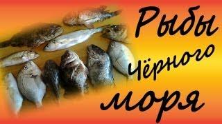 Рыбы чёрного моря(В ролики показаны Черноморские рыбы. В частности, Скорпена, Луфарь, Карась,Барабуля, Морская корова, Темный..., 2013-06-07T12:59:42.000Z)