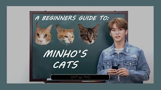 a beginner's guide to lee know's cats