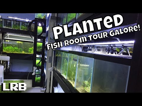 Biggest Planted Fish Room Aquarium Gallery Collection Freshwater Tour! Lots of Tanks!