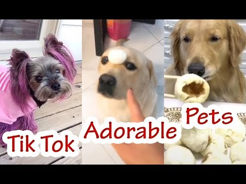 Adorable Pets - Videos Funny Tik Tok Animal