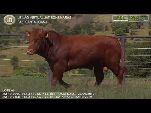 LOTE 043