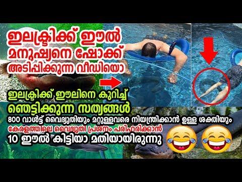 Shocking Facts about Electric eel |ഇലക്ട്രിക് ഈലിന്റെ ഞെട്ടിക്കുന്ന കാര്യങ്ങള് ! മനുഷ്യരെ കൊല്ലും