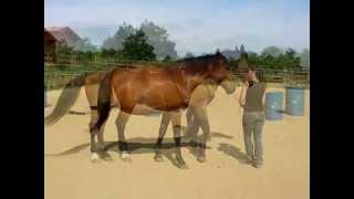 egy kis gyakorlás - Jana&Harold