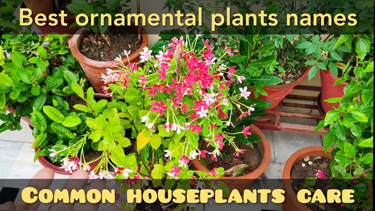 Best ornamental plants names n price, common houseplants names, must on moon phases names, looney tunes characters names, weapon names,